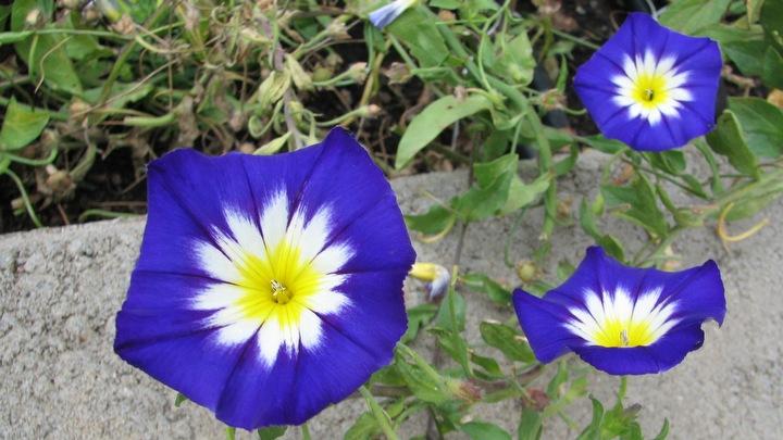 Kesäkukat kukkivat koko kesän ajan