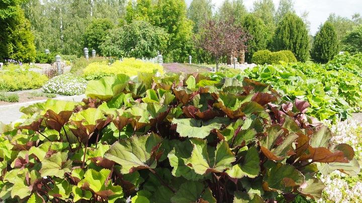 Yleistä puutarhan kasveista