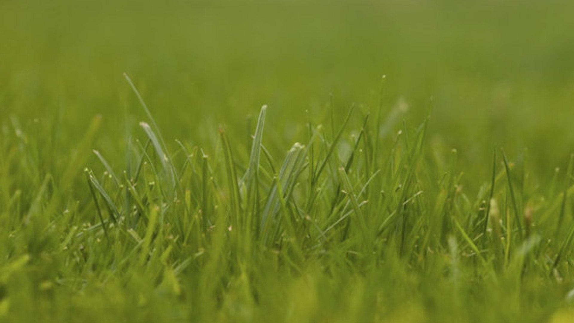 Nurmikon ja niityn perustaminen