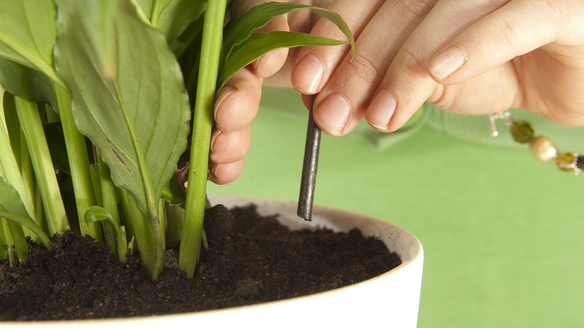Biolan -huonekasvilannoitteet